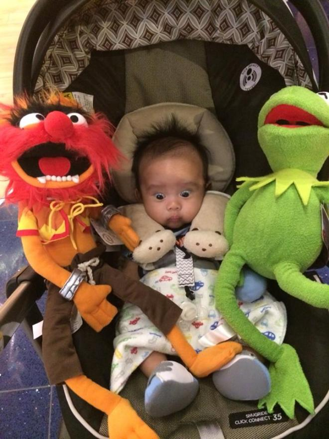 Bash and The Muppets