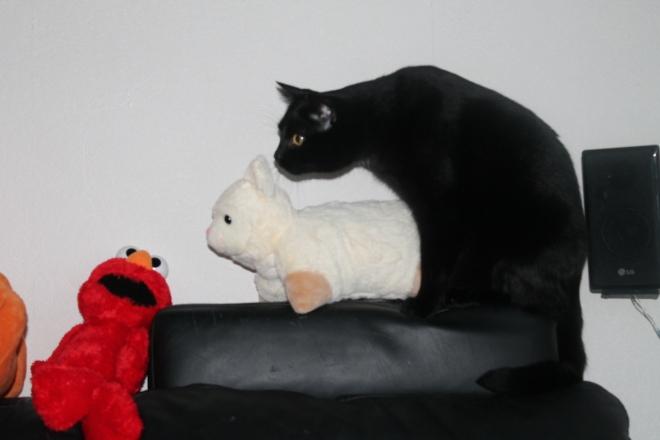 Simba and Schapje