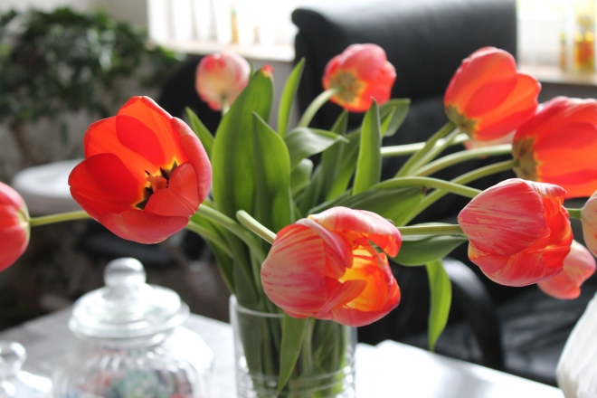 Tulips at 15.00